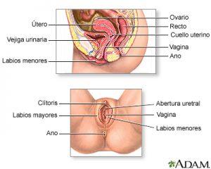 vaginismo-vagina